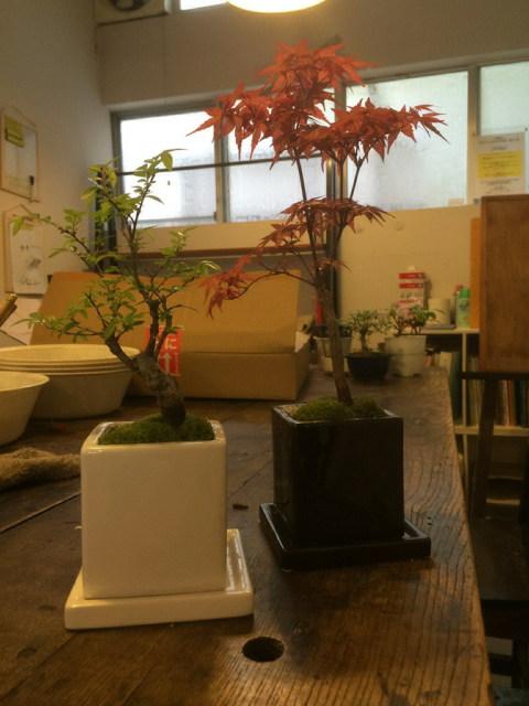 4月のモダン盆栽教室作品